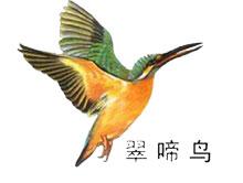 上海翠啼鸟服饰有限公司