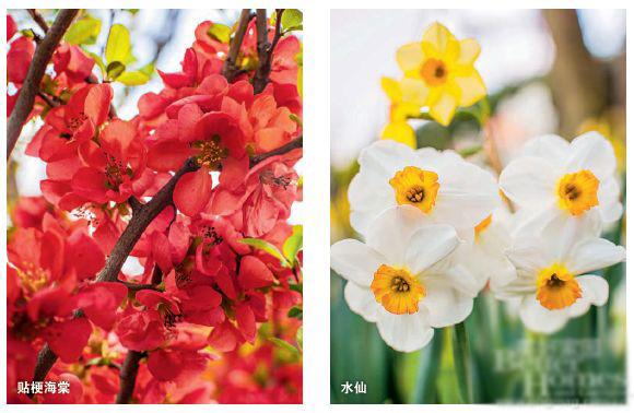 早春花卉推荐 欢迎春天