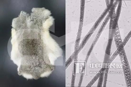 中纺标:涨见识|常见动物毛皮在宏观微观形态下的辨别