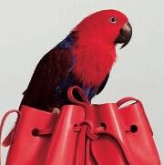 水桶包设计遭大量抄袭 Mansur Gavriel发起批量诉讼
