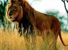 宁波雅戈尔动物园老虎伤人背后 可曾看到男装转型?